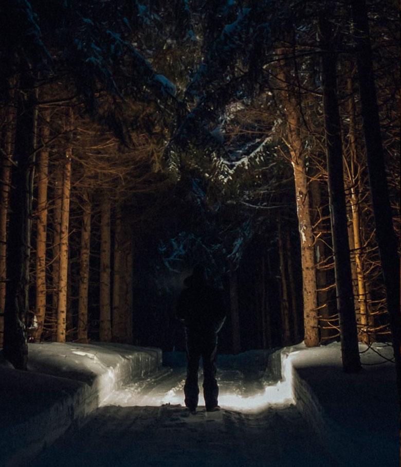 LP_TORCH_forest